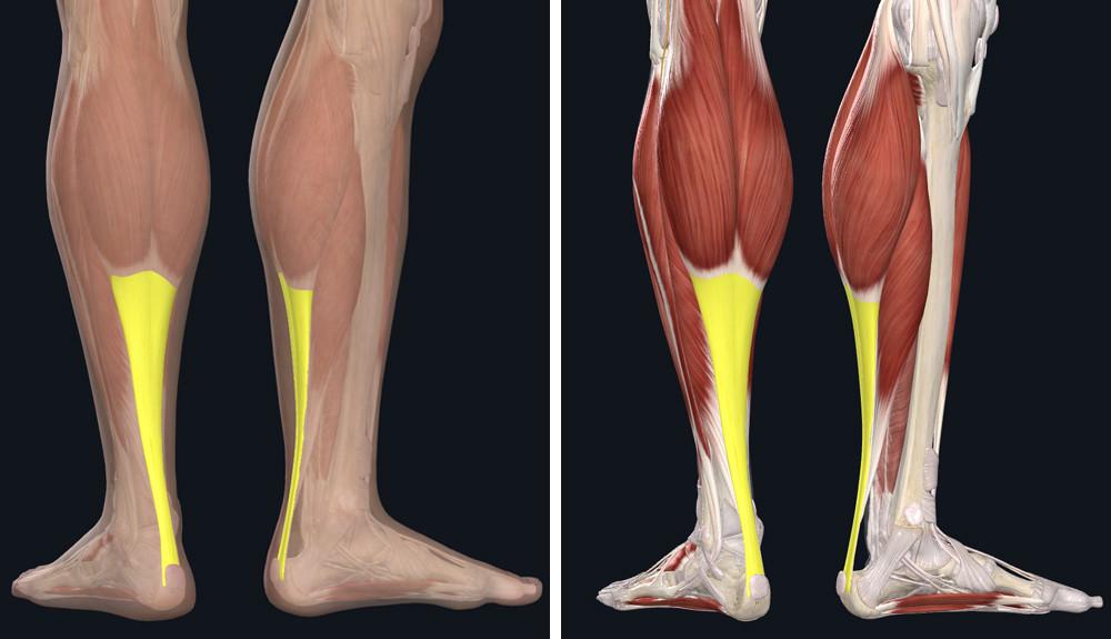 fájhat-e a térd visszérbetegségekkel milyen gyógyszerek a visszerek kezelésére a lábakon