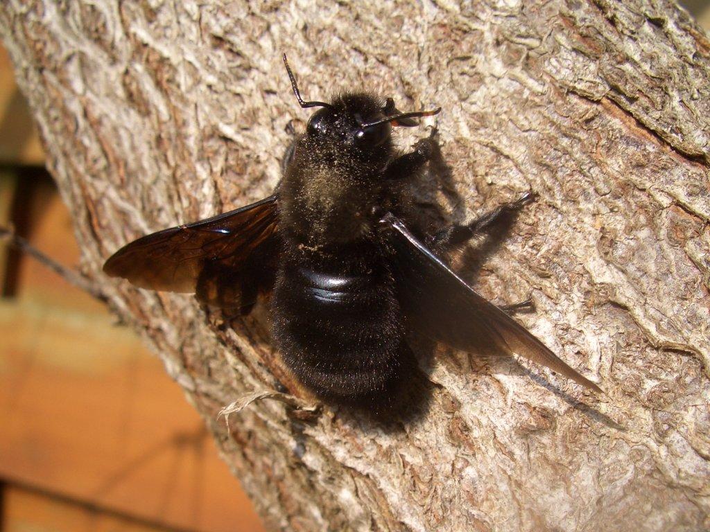 mi a veszélye a méh visszérnek
